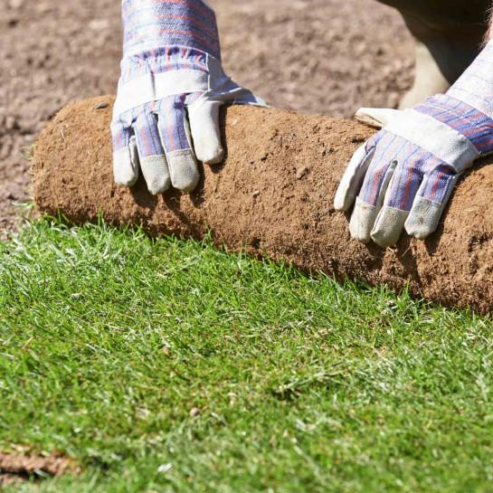 Rasen mit Rollrasen anlegen
