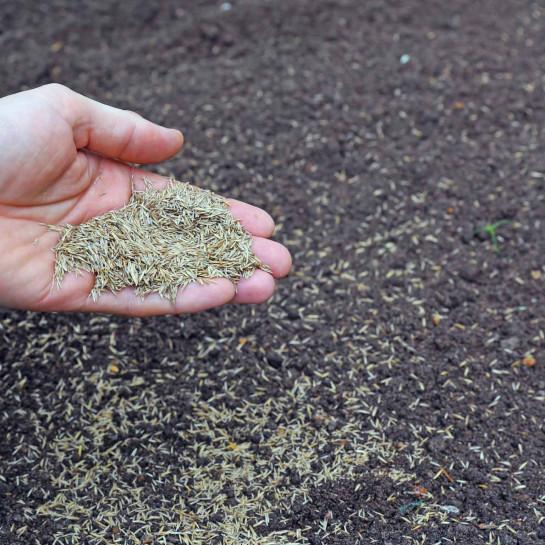 Rasen mit Grassamen anlegen